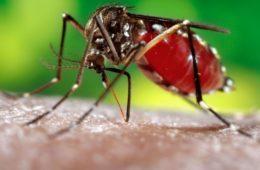 Aumento de casos de dengue